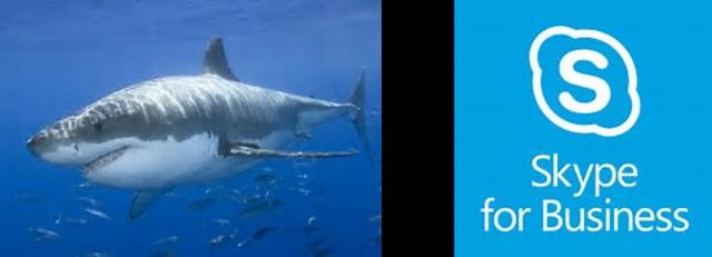 SharkSkypeWeek-487216-edited.png